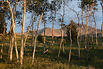 An aspen grove and the Lima Peaks in southwest Montana