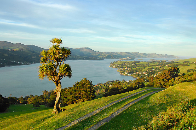 Looking down Otago Harbour towards Port Chalmers from Claremont Farm high on the Otago Peninsula.