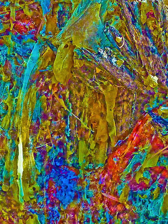 &quot;MONTANA MOOSE&quot;<br />