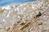 Hermit crab walking down to the sea, Ibiza, Spain - Photo by Nano Calvo