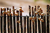 Snail shells on reeds<br /> <br /> Conchas de caracoles en ca&ntilde;as<br /> <br /> Schneckenh&auml;user an Schilfrohren<br /> <br /> 2107 x 1400 px<br /> Original: 35 mm