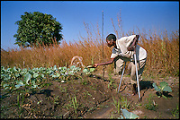 Kanhenge, Angola, May 2006.Vicano Mucanda, 47, who lost a foot on a landmine, and his son Manoel Silva, 4, are beneficiaries of a WFP irrigation program. Just 4 years after the end of a 25 year long civil war, Angola is starting to emerge again, yet a lot remains to be done: entire regions are still cut-off from the ouside world because of landmines and broken bridges, over 80% of the population lives below the poverty threshold in one of the potentially richest country in Africa. Natural ressources include oil, diamonds, gold and...water!.Malaria, tuberculosis, HIV/Aids are endemic, cholera and meningitis frequent.