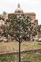 Roman Forum, Rome, Italy.<br />
