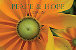 Peace & Hope to Joplin