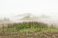 Mist rolls in over the small dunes which meet the sand at Singing Sands on the shores of Lake Huron, Ontario.