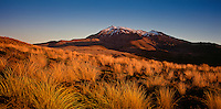 Mt Ruapehu and Tussock at sunset,Tongariro National Park