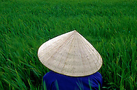 Images from the Book Journey Through Colour and Time. Vietnam Delta a rice farmer in the paddy fields.