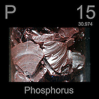 Phosphorus and periodic table information