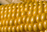 Stock shots of corn...Photo stock for Ethanol in the Midwest. .(Chris Machian/Prairie Pixel Group)