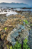 Dusk on rocky shores of Kaikoura coastline with Kaikouras mountains in background and seaweed, Kaikoura, Marlborough Region, South Island, East Coast, New Zealand