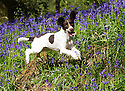 2015_05_21_chester_bluebells