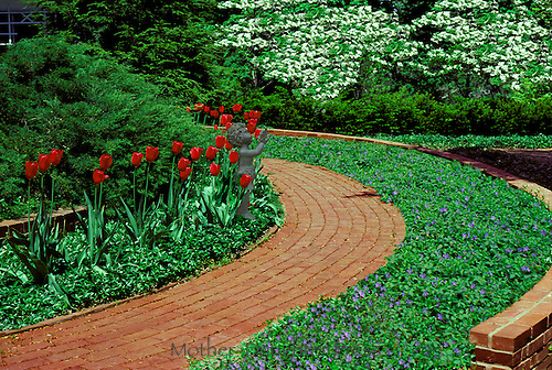 Brick path with red tulips