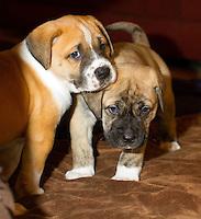 Diana Crimi's rescue puppies