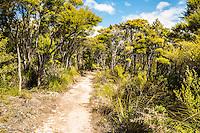 Native coastal forest of kanuka/manuka on Abel Tasman Coast Track near Totaranui, Abel Tasman National Park, Nelson Region, South Island, New Zealand