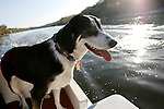 Philadelphia, Pennsylvania - A Dog on a boat in the early morning hours on the Schuylkill River in Philadelphia, Pennsylvania.