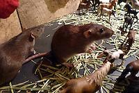 Pet dumbo eared rats meet a herd of model horses