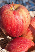 Apple Gala fruits