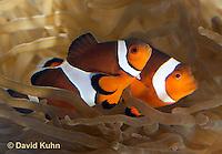 Marine, Reef, Estuary Fish