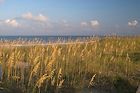 Florida, Fernandina Beach, Fort Clinch State, Park Sea Grass