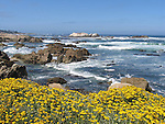 View from 17- Mile Drive, California, USA