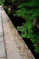 Brightly green Japanese maples line the stream that runs alongside the Philosopher's Path in summertime in Kyoto.
