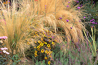 Coreopsis tinctoria and grasses