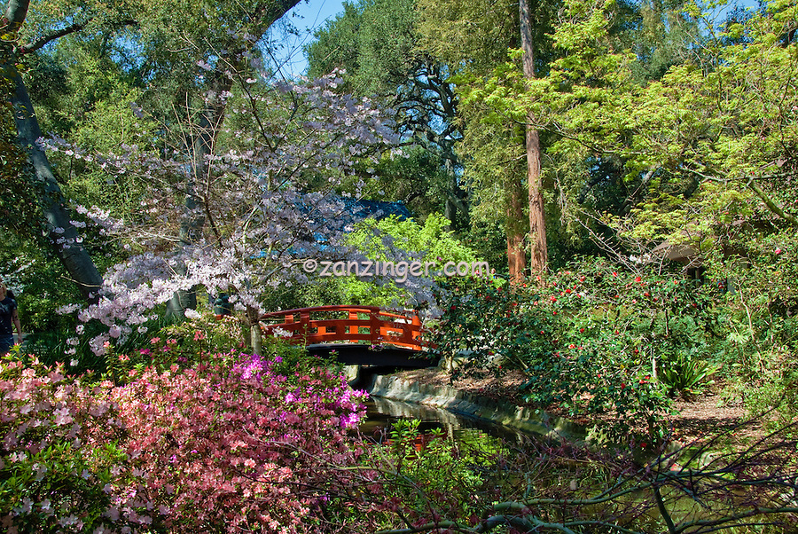 Descanso Gardens, La Canada, Flintridge, California, Japanese Tea Garden, Bridge,