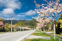 Spring in small township of Ross near Hokitika, West Coast, South Westland, New Zealand