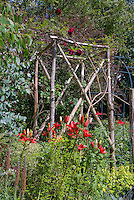 Cottage garden trellis with climbing red roses Rosa and lilies Lilium, vertical gardening, tall plants, Aeonium, Alchemilla ladies mantle, Eucalyptus, wooden poles and wire archway