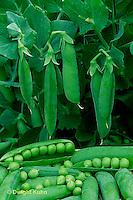 Peas -  Life Cycle