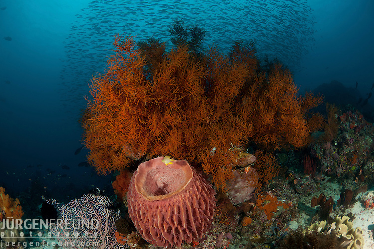 Healthy coral reef. Black coral bush and barrel sponge with schooling fish in the background.