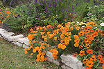 Marigolds, daisy, salvia in a fall, autumn garden with rock edging.