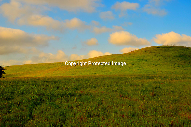 Early morning at an open meadow stock photo