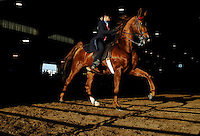 Cheryl Perkins rides Trefethen in the Country English Pleasure Championship at the Boone County Fair.  Perkins took second in the event.