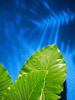 Shadows on a blue wall, Langkawi, Malaysia