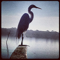 An Egret on a dock railing in Holly Hill, FL, iPhone photo from the instgram photostream of bcpix, Florida-based freelance photographer Brian Cleary. (Photo by Brian Cleary/www.bcpix.com)