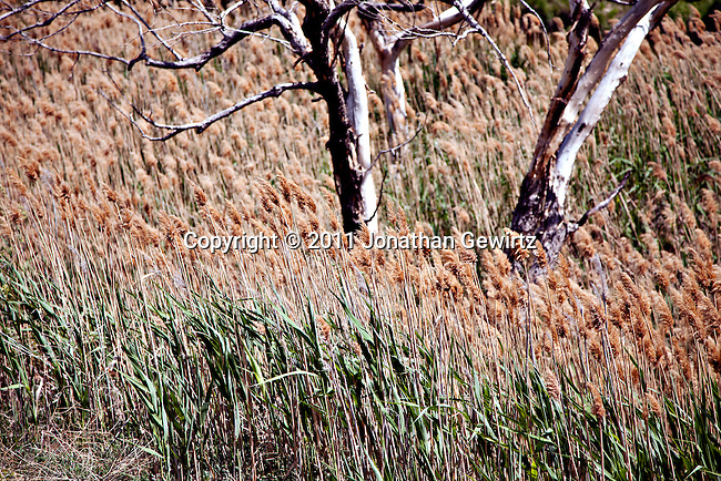 Tall grasses and dead trees fill a dry river bed in Colorado.