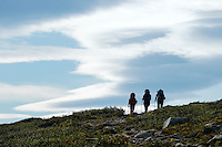Group of hikers hike on trail between Abiskojaure and Alesjaure, Kungsleden trail, Lapland, Sweden