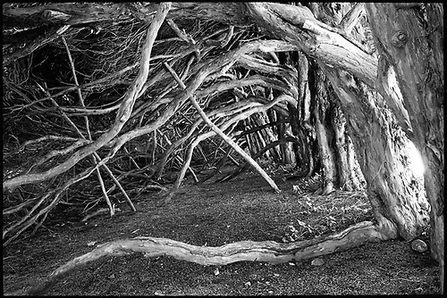 Tree Roots and Branches, Blickling Estate, Norfolk by Paul Cooklin