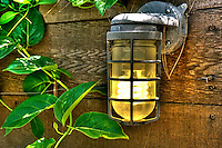 Outdoor, Industrial Lighting, Cage Light, Galvanized Light, Wood Plank, Green Ivy