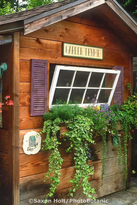 Rustic window box on salvaged wood garden shed