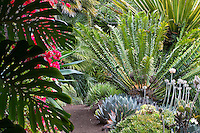 Don Worth tropical foliage California garden, with Cycad, succulent border as seen from behind Philodendron in shady breezeway