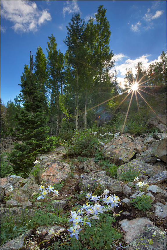 While on a hike to Crater Lake in Colorado's Maroon Bells Wilderness Area, I paused to enjoy the moment of sunlight streaming through the aspen trees. I found a small group of columbine on a nearby ridge and attempted to capture the timeless momen in a photograph. For some reason, John Denver tunes kept moving through my mind in the moments while hiking around this wonderful area of the Rocky Mountains.