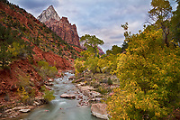 The Virgin River in Zion National Park flows through the Utah Fall colors being displayed in the park.