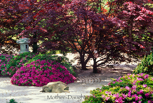 Japanese Zen Garden with Azaleas and red maple trees at St. Louis Botanical Garden, Missouri USA