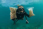 Brazilian Fred Gurgel collecting algae and seaweeds (macroalgae) in Lizard Island
