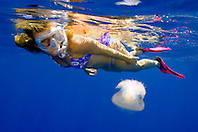 woman snorkeler and crowned jellyfish, Cephea cephea, offshore, Kona, Big Island, Hawaii, Pacific Ocean