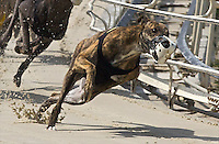 Greyhound Racing by Brian Cleary
