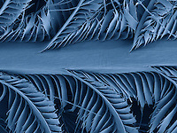 SEM of Eastern bluebird (Sialia sialis) feathers.  This image is 500 um wide..These feathers have micro-structures that reflect blue light.  These microscopic features allow the bird to display bright blue iridescent colors.