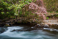 Red and green plants flourish over Waipi'o Valley River, Big Island.